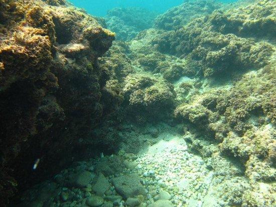 Τελ Αβίβ, Ισραήλ: scuba diving in tel aviv