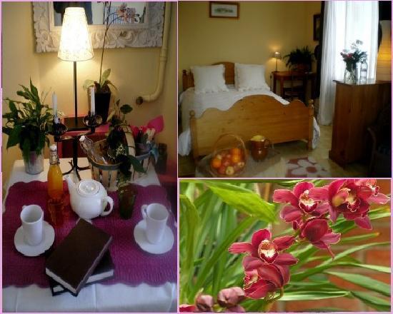La Violette : La chambre des orchidees