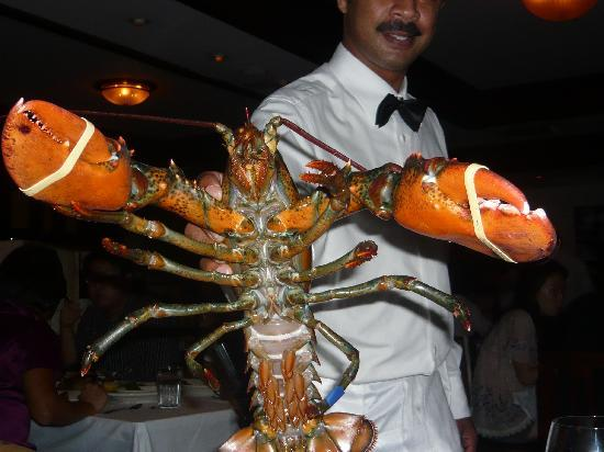 Morton's, The Steakhouse: Huge lobster
