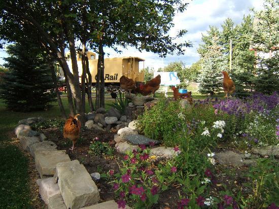 Kootenai Brown Pioneer Village: Kootenai chickens