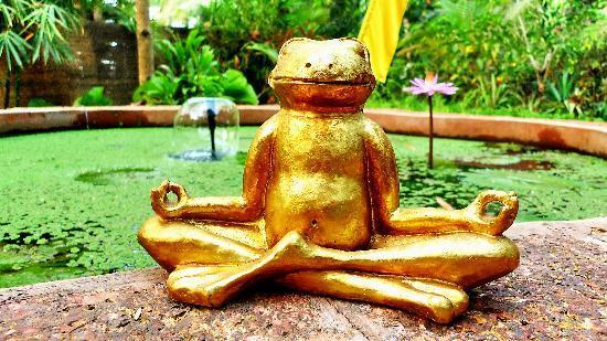 Casa Tres Amigos: At the Lotus Pond
