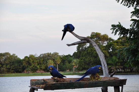 Pousada Arara Azul