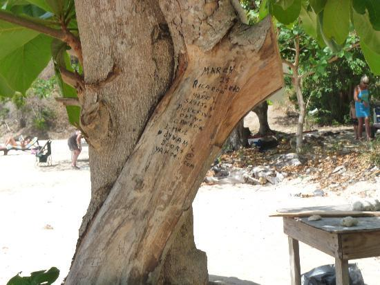 Princess Margaret Beach: Hideous graffiti on living tree at heart of beach by tourists - they should be ashamed!!!!