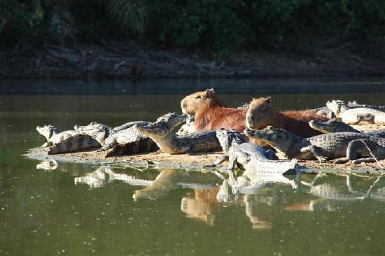 Miranda Mato Grosso do Sul fonte: media-cdn.tripadvisor.com