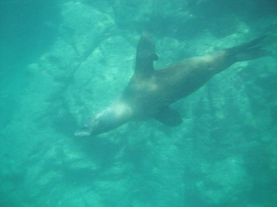 Las Gaviotas Resort: Snorkling with the seals