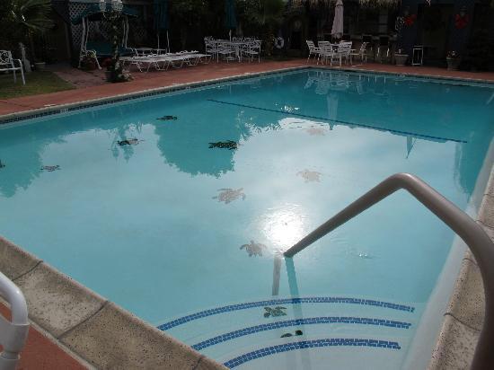 Casa Larrea Inn : Pool