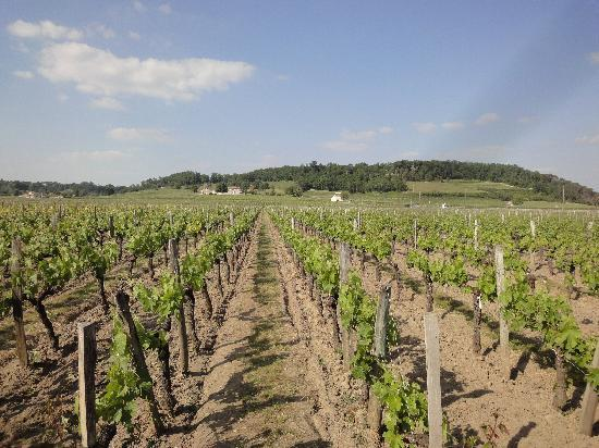 Saint-Hippolyte, France: the vineyards
