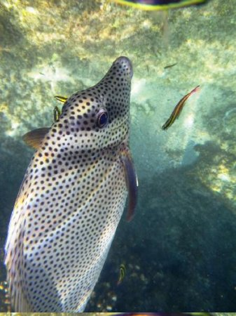 Chileno Beach: fish