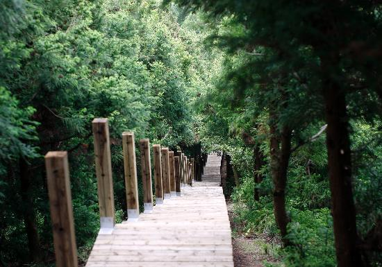 Jeju Island, South Korea: geomun oreum  world natural heritage