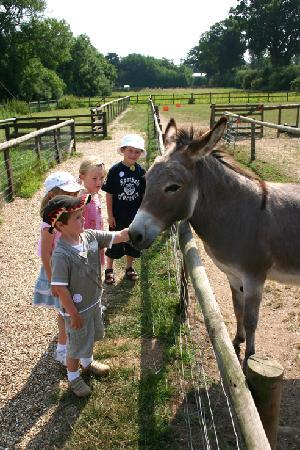 Hoveton, UK: All the fun of Junior Farm