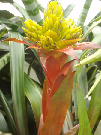 Conservatory of Flowers: eight