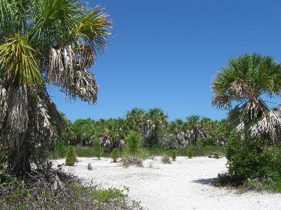 Egmont Key State Park: trails everywhere