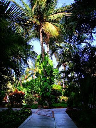 Hotel Marina: Jardines