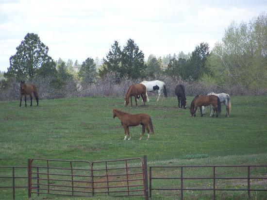 Echo Basin Cabin and RV Resort: Some of the Horses here at Echo Basin Ranch
