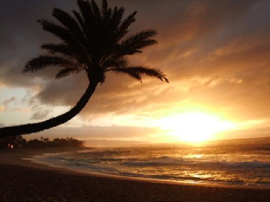 Sunset Beach Park: ココナッツのシルエットが素敵
