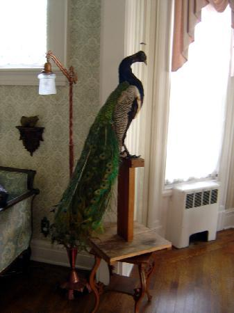Alexander Hamilton House: The peacock in the parlor