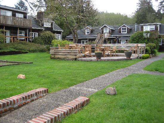 Ecola Creek Lodge: Hotel, plus bunnies!