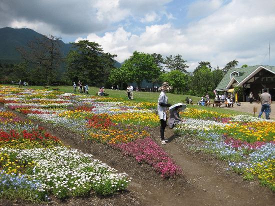 Kuju Flower Park: 色とりどり
