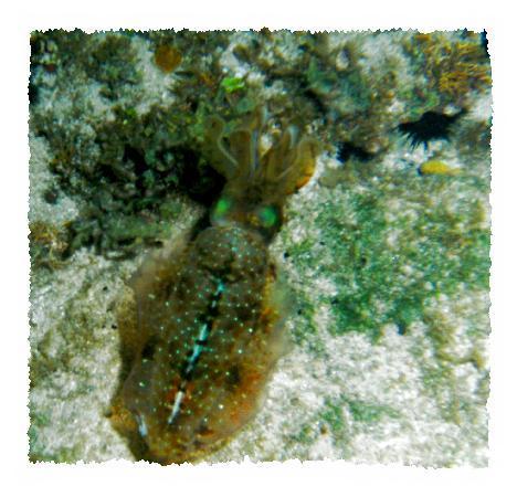 Nagy-Kajmán: Squid at Night Dive with Dive Tech shore dive