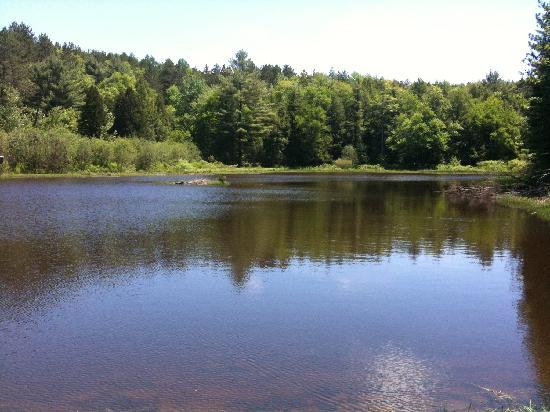 Gilbert Lake State Park: One of the ponds along the hiking trails