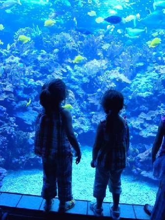 Maui Ocean Center: The Living Reef