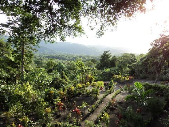 Tanna Tree Top Lodge: the top tree house has a view of the volcano on one side and of this beautiful garden on the oth