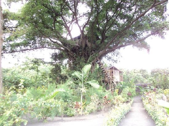Tanna Tree Top Lodge: the 2 tree houses
