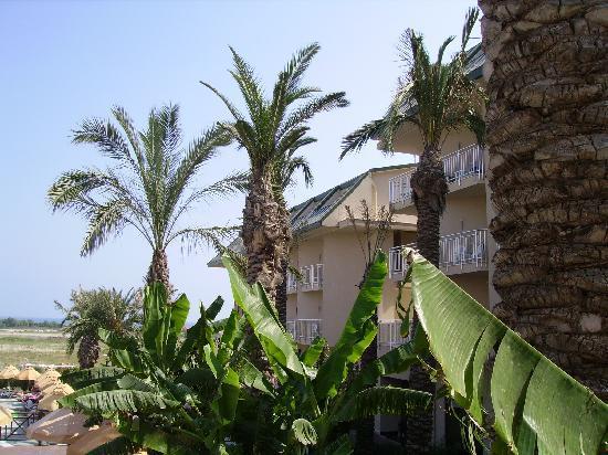 Novum Garden Side: Bananenstauden, Palmen und das Hotel