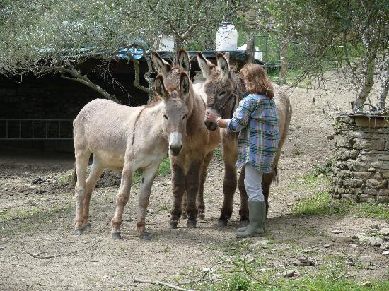 Margherita Holiday Home : Beatrice with the donkeys