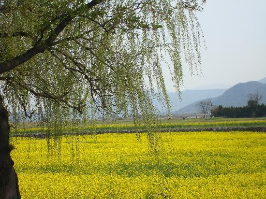 Gyeongju, Sør-Korea: Daeungwon - Tumuli Park
