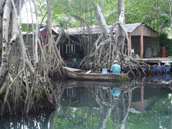 Njoy tours: mangrove