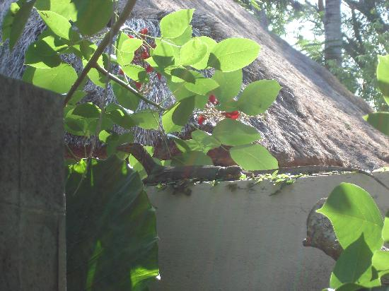 Kayumanis Nusa Dua Private Villa & Spa : invité de notre villa