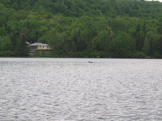 Averill, VT: Loon