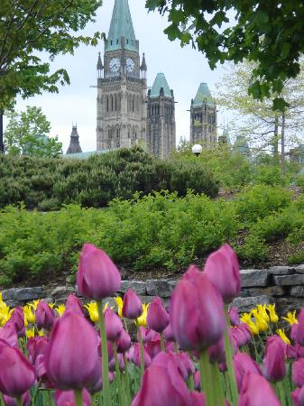 WelcomINNS: Parliament and the tulips during the festival