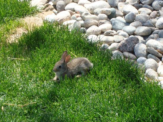 Hampton Inn & Suites Denver Highlands Ranch: One of the locals :)