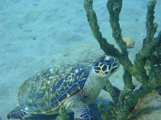 ALDive & W.A.T.E.R Sports: Dominica turtle