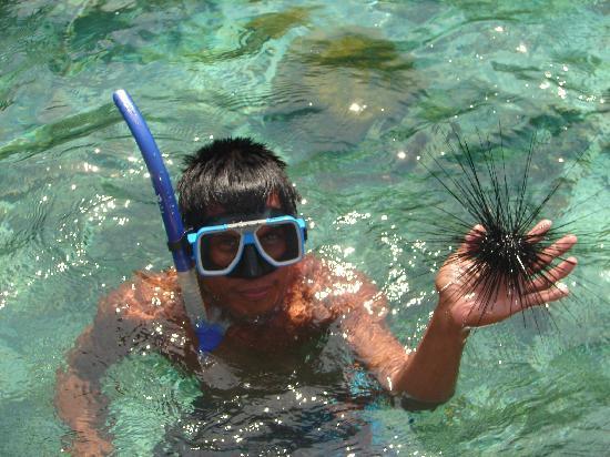 Majika's Island Resort: So that's how you hold a sea urchin!