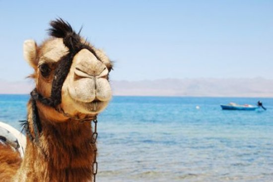 Hurghada, Egypt: sharm elnaga significa baia dei cammelli