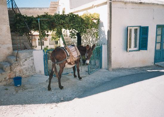 Bellapais, Cypr: Village life