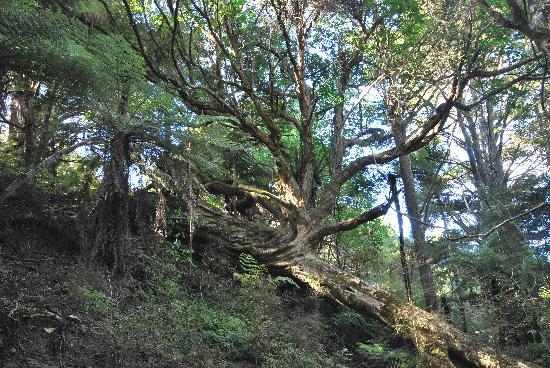 """Kauri Villas: This enchanted forest is in the """"front garden""""!"""