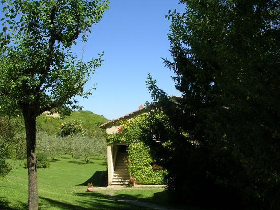 Agriturismo Nobile: podere oliveto