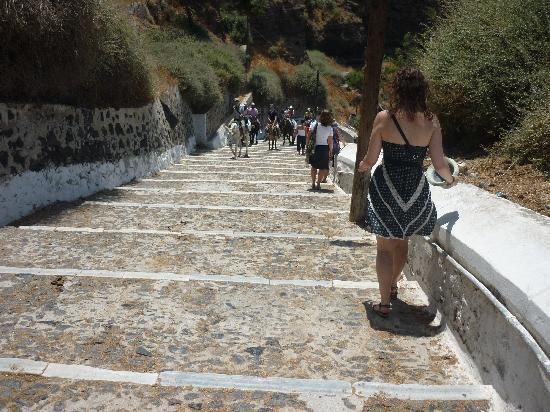 Aegean View Hotel: Donkeys in Thira