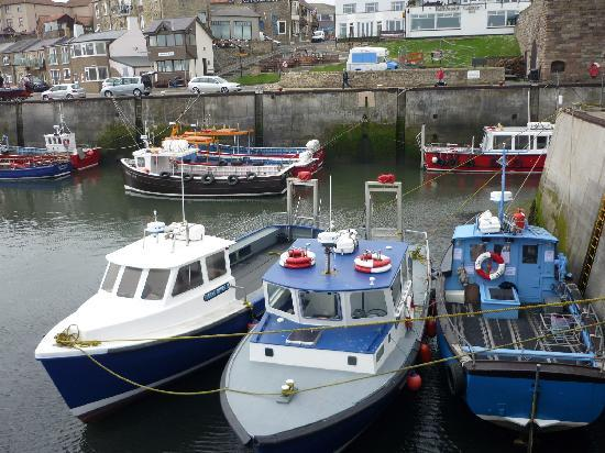 Seahouses, UK : horbour