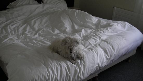 Hotel Leopol: Rien de tel qu'un bon lit