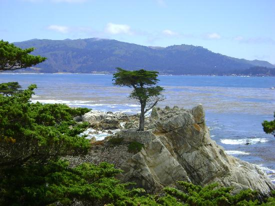 17-Mile Drive: The Lone Cypress