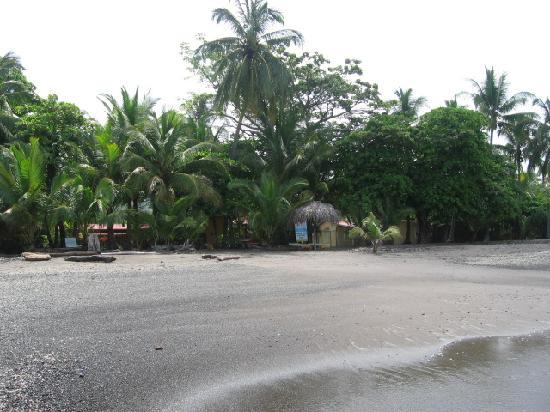 Fenix Hotel - On The Beach: View of the hotel grounds from the beach.