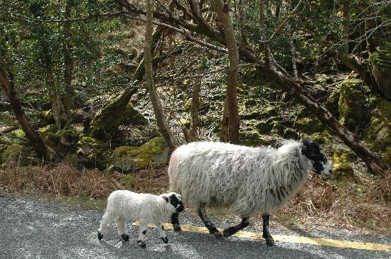 Driftwood: Killarney National Park is nearby