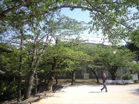 Chofu Museum Main Bldg: 桜の樹の向こうに博物館が見えます