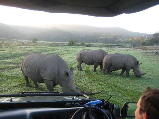 บ็อทเลียสก็อปไพรเวทเกมรีเซิร์ฟ: Bei den Rhinos