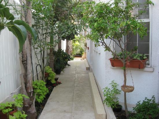 Dekel Guesthouse - Ramat Gan: Garden
